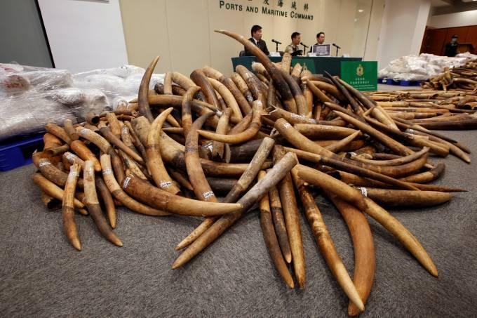 Marfim apreendido em Hong Kong