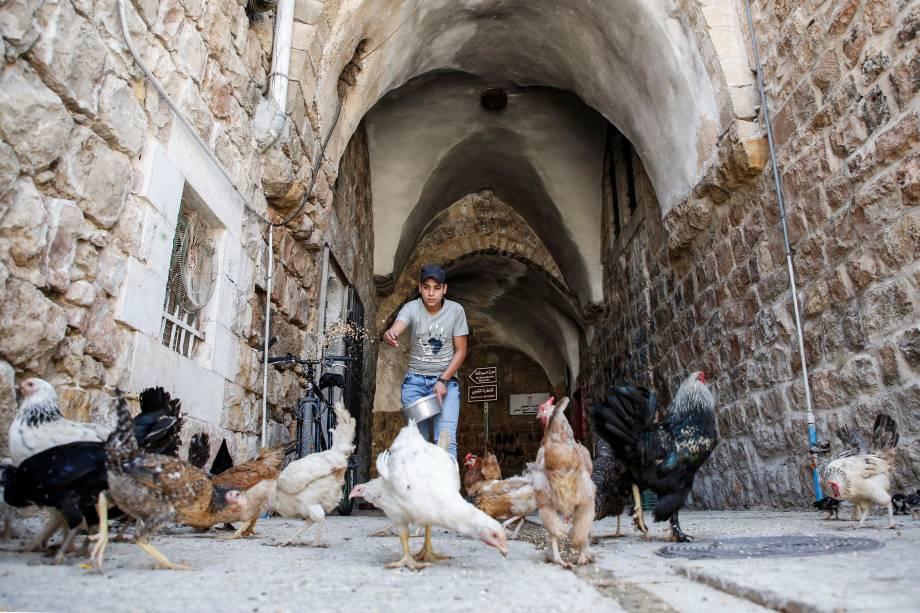 Homem alimenta galinhas em um beco do antigo mercado da cidade Hebron, na Cisjordânia