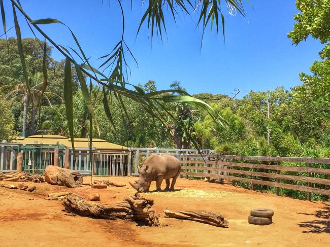 oas melhore zoológicos do mundo