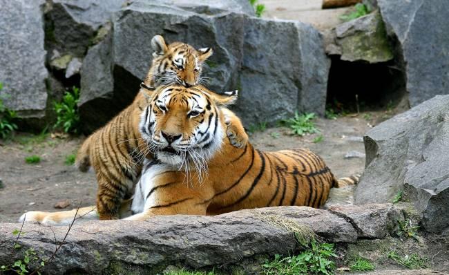 os zoológicos mais incríveis do mundo