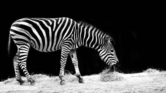 os melhores zoos do mundo
