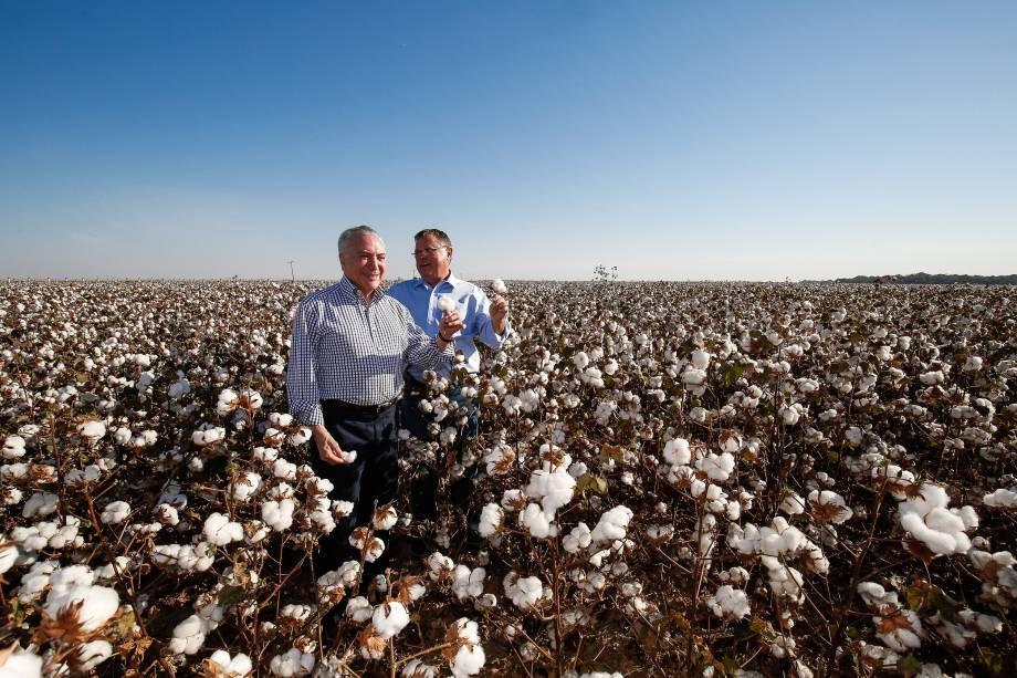 Presidente Michel Temer acompanhado do ministro da Agricultura, Pecuária e Abastecimento, Blairo Maggi, durante a abertura da colheita do algodão em Lucas do Rio Verde (MS) - 11/08/2017