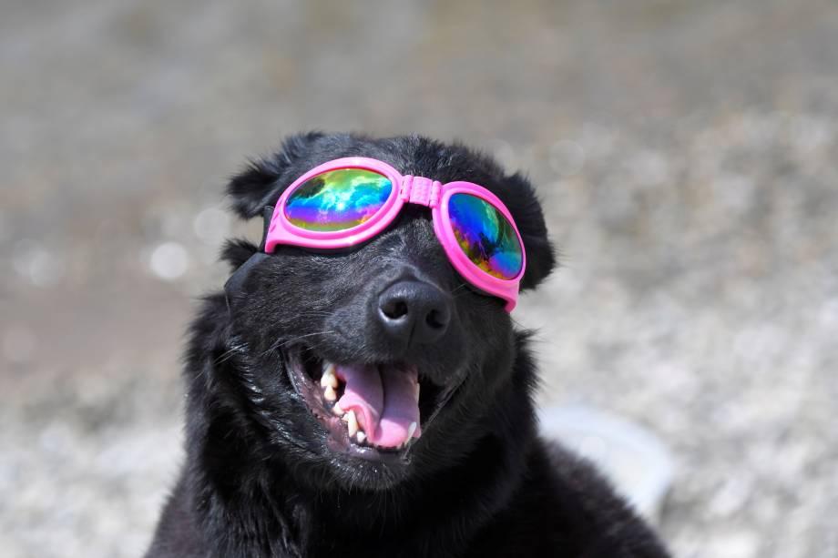 Cão usa óculos para observar o eclipse solar total em Nashville, no estado americano do Tennessee - 21/08/2017