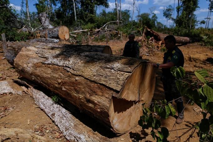 Agentes do Ibama desmontam um acampamento ilegal, durante 'Operação Onda Verde' contra desmatamento em Apuí, no Amazonas