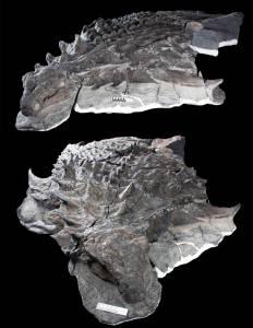 dinossauro Borealopelta markmitchelli