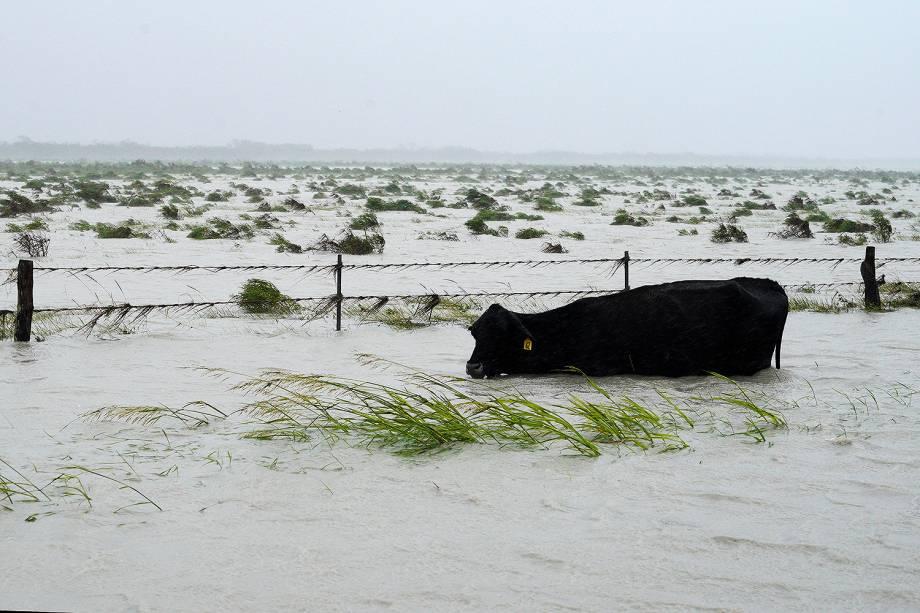 Furacão Harvey deixa mortos e inundações no Texas  - 27/08/2017