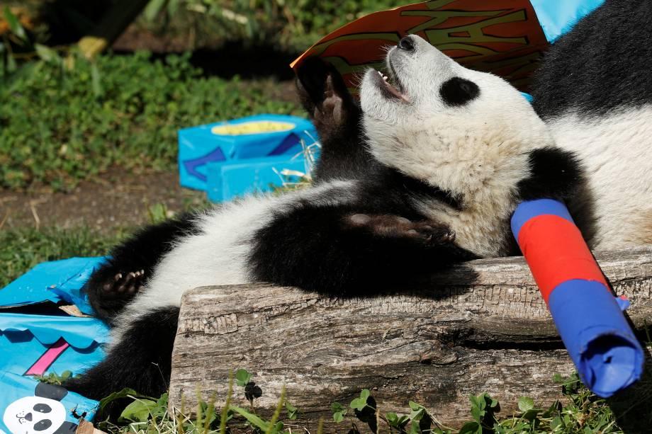 O gigante Panda Cub Fu Ban é fotografado entre parcelas que contêm alimentos em seu primeiro aniversário no Zoo de Schoenbrunn, em Viena, na Áustria - 07/08/2017