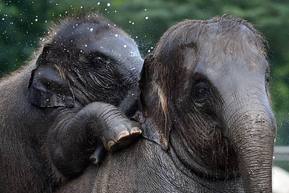 O bebê Edgar se diverte durante o banho em família, no zoológico Tierpark, em Berlim na Alemanha - 10/08/2017