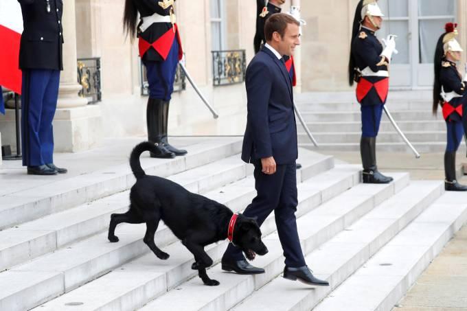 Presidente da França adota cachorro