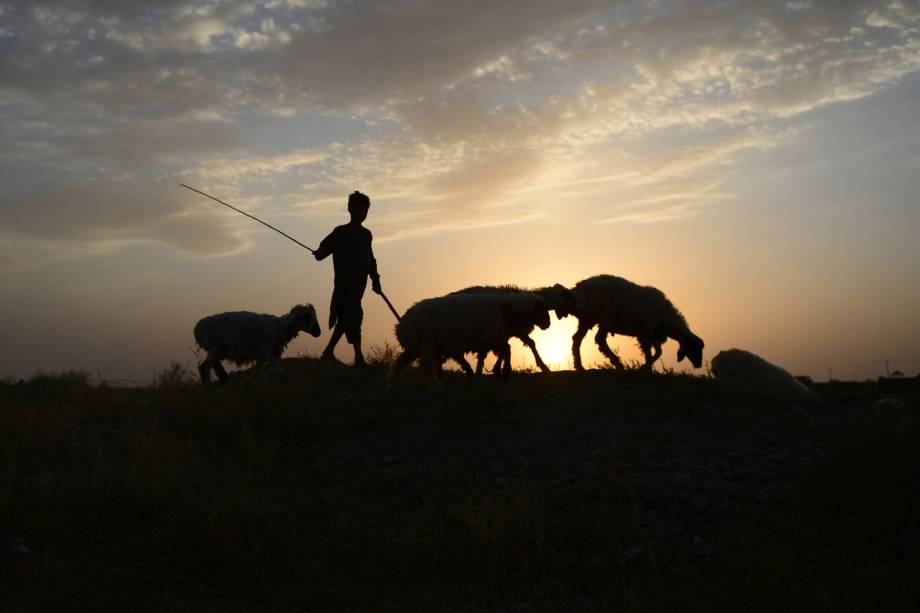 Nos arredores de Herat, no Afeganistão, um garoto pastoreia suas ovelhas durante o pôr do sol - 09/08/2017