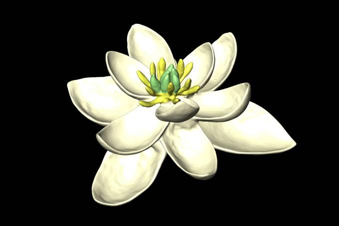 Primeira flor do mundo