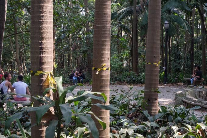Palmeiras seafortia no Parque Trianon