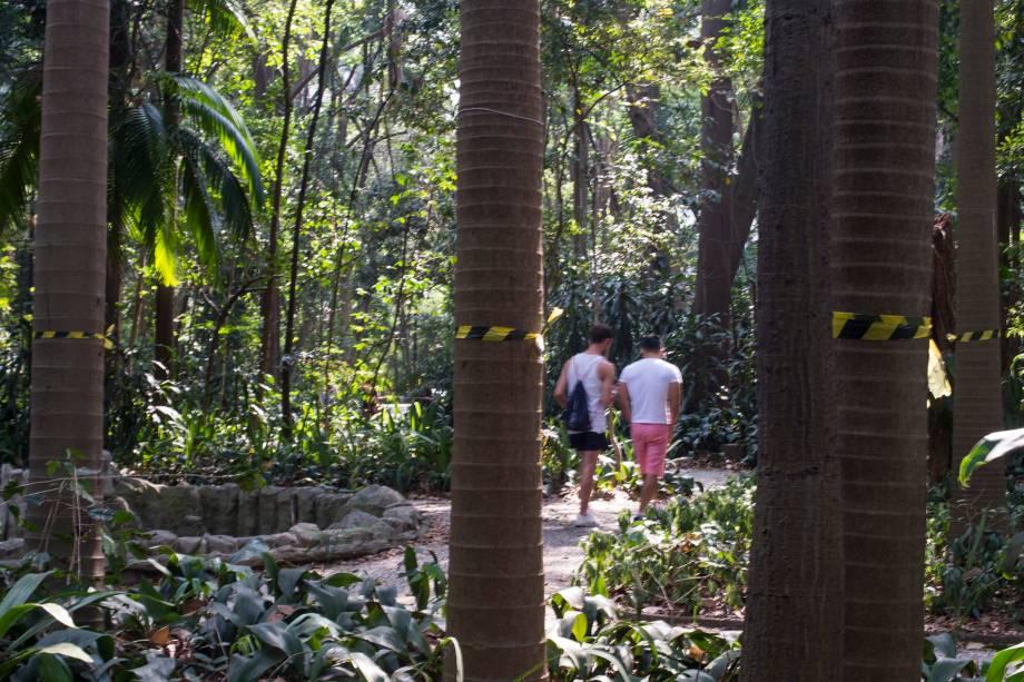 Palmeiras seafortia no Parque Trianon, em São Paulo