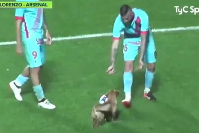 Cachorro invade campo em partida do Campeonato Argentino