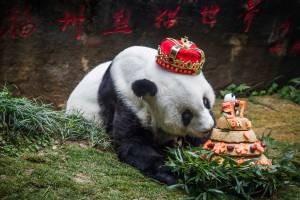 Morre o panda mais velho do mundo