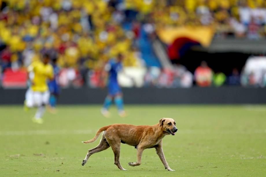 Cachorro invade campo durante partida entre Colômbia e Brasil, em Barranquilla