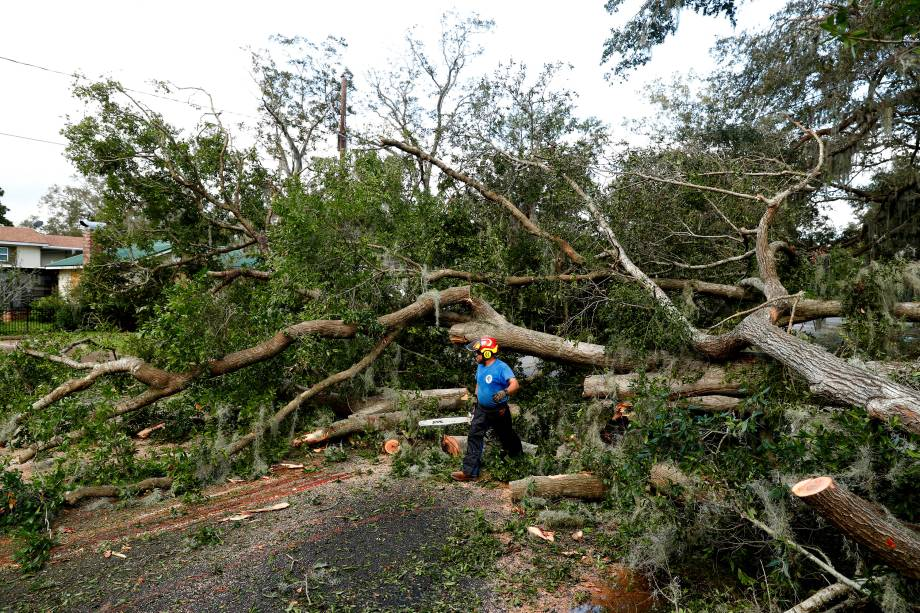 Um funcionário do departamento de obras públicas da cidade de St. Marys, na Georgia, examina uma árvore caída depois da passagem do furacão Irma - 12/09/2017