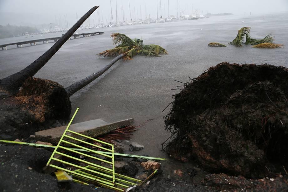 Árvores são arrancadas pela força do vento, devido ao furacão Irma, em Fajardo, Porto Rico