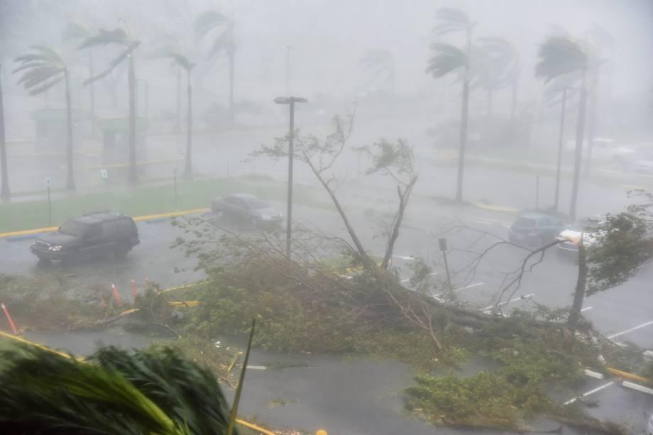 Árvores são derrubadas em um estacionamento no Coliseu Roberto Clemente em San Juan, em Porto Rico, durante a passagem do furacão Maria - 20/09/2017