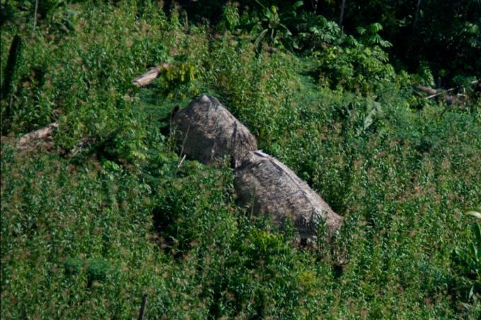 Maloca de índios isolados na Terra Indígena Vale do Javari