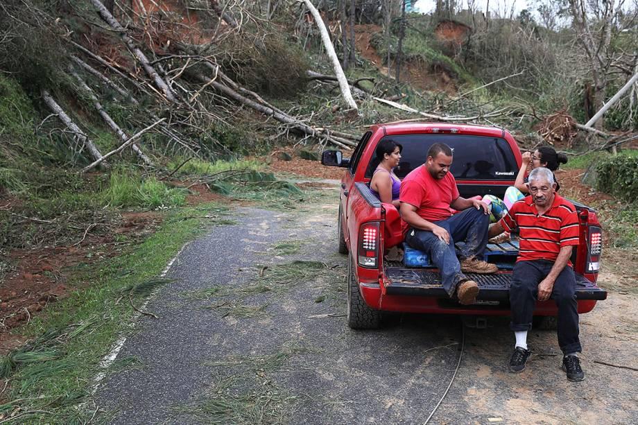 Árvores derrubada pelo furacão Maria obstrui estrada em Hayales de Coamo, Porto Rico