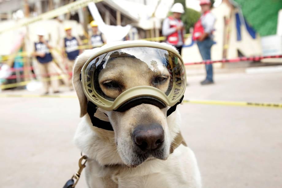 Cão de resgate usa óculos de proteção durante busca por sobreviventes, na Cidade do México - 22/09/2017