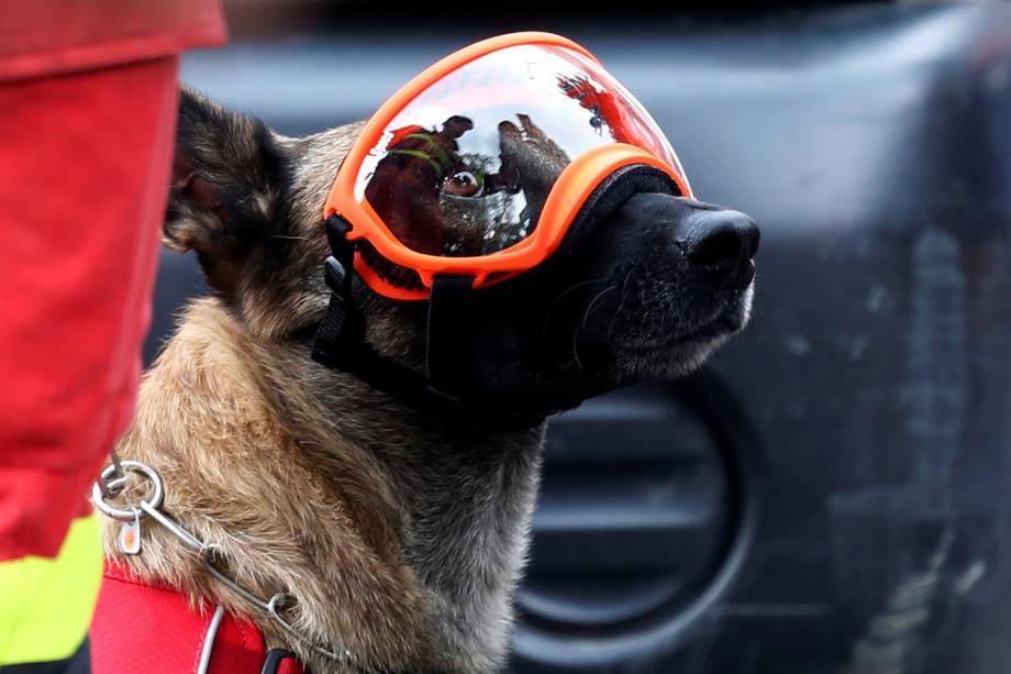 Cão de resgate usa óculos de proteção durante busca por sobreviventes, na Cidade do México