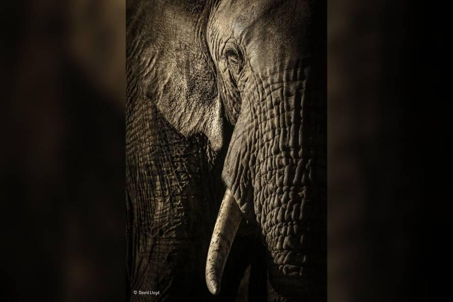 Líder de uma manada de elefantes encara o fotógrafo enquanto ele captura a essência de seus olhos cor de âmbar e suas pesadas dobras na pele. O bando conduzido pela fêmea estava se dirigindo a um poço d'água localizado na Reserva Nacional de Maasai Mara, no Quênia.