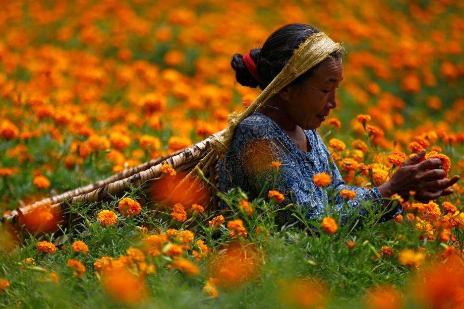 Uma mulher escolhe flores de calêndula para fazer guirlandas e oferecer em orações antes de vendê-las ao mercado para o festival Diwali, também conhecido como festival das luzes , em Katmandu, no Nepal - 17/10/2017