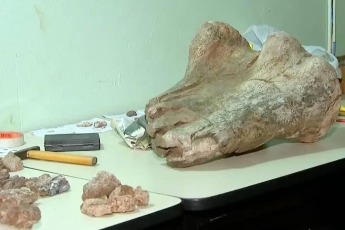 Morador de Jaci encontra fóssil em área rural da cidade