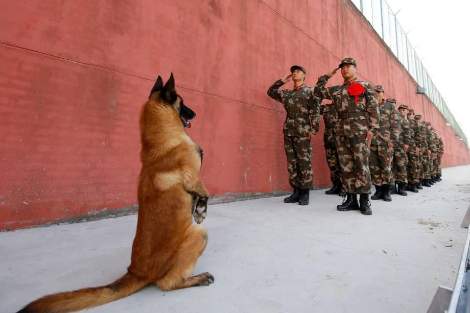 Cão do exército levanta-se enquanto soldados fazem continência antes de se aposentarem em Suqian, província de Jiangsu, na China 28/11/2017