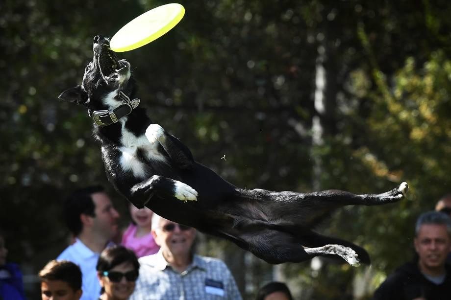 Cão salta para pegar frisbee durante evento em Beverly Hills, no estado americano da Califórnia - 05/11/2017