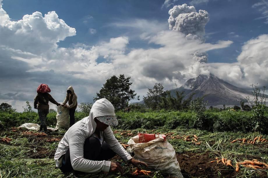 Agricultores trabalham em uma horta de cenoura enquanto o vulcão Monte Sinabung expele fumaça ao fundo, na regência de Karo, na Indonésia - 16/11/2017