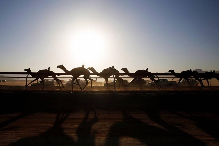 Camelos disputam corrida no Wadi Rum, parque localizado na Jordânia - 02/11/2017