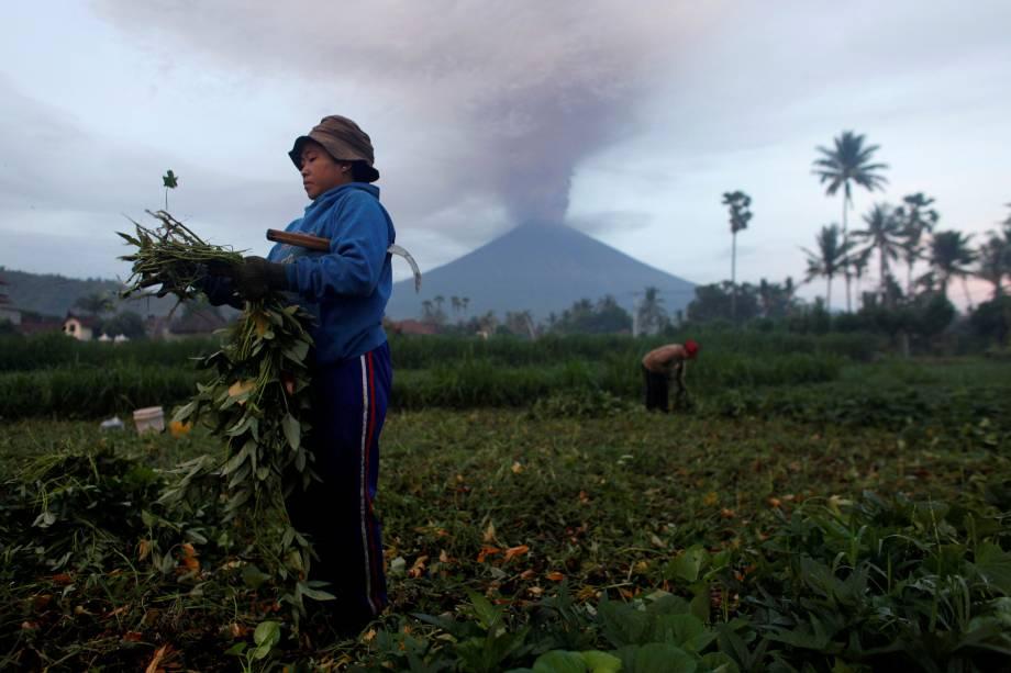 Agricultores cuidam de suas colheitas enquanto o Monte Agung entra em erupção em Bali, na Indonésia - 27/11/2017