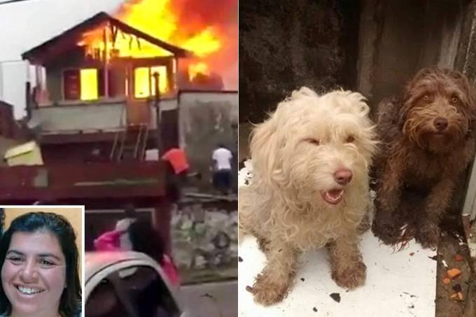 Mulher morre para salvar cachorros em SP