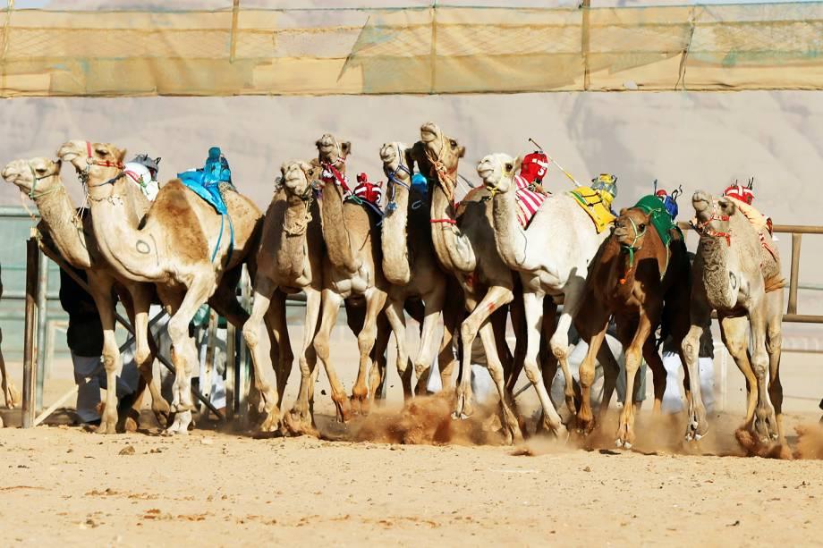 Camelos participam de corrida de 5km, no vale de Wadi Rum, na Jordânia - 02/11/2017