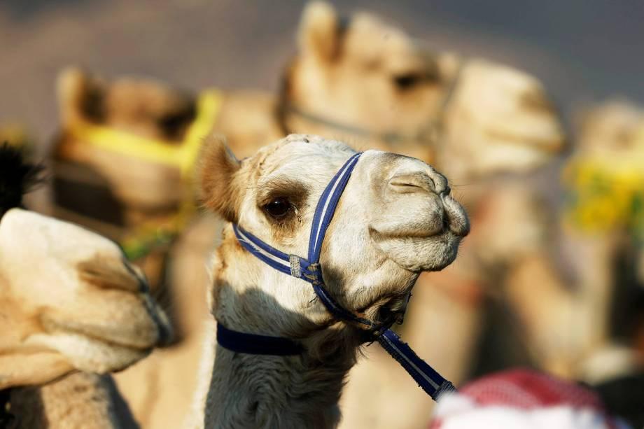 As corridas ocorrem anualmente no vale de Wadi Rum. Competidores de Jordânia, Arábia Saudita e países vizinhos participam - 02/11/2017