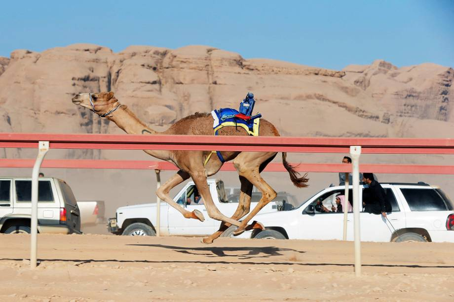 Donos de camelos conduzem seus animais através de carros, em corrida anualmente realizada no vale de Wadi Rum, na Jordânia - 02/11/2017