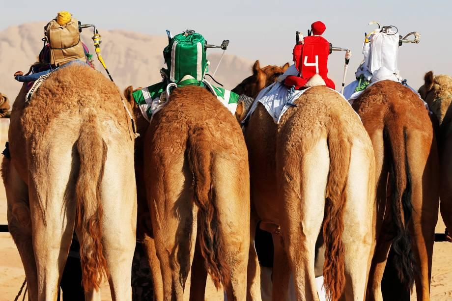 Jockeys de robô são vistos em camelos durante corrida realizada anualmente em Wadi Rum, na Jordânia - 02/11/2017