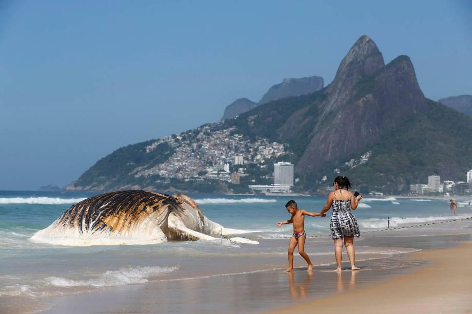 Corpo de uma baleia morta encalha na praia de Ipanema, no Rio de janeiro - 15/11/2017