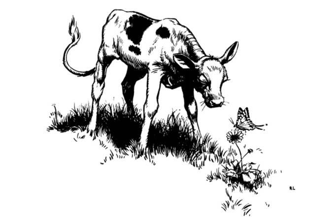 """Ilustração do livro """"O Touro Ferdinando"""""""