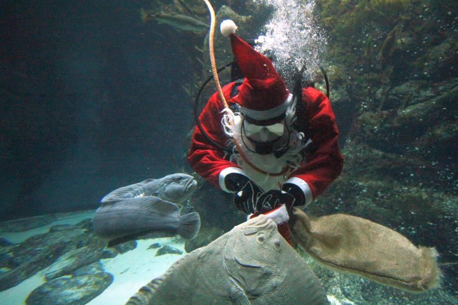 """Um mergulhador vestido como Papai Noel abre sua bolsa para distribuir presentes aos peixes que vivem no aquário """"Multimar Wattforum"""" em Toenning, no norte da Alemanha - 04/12/2017"""