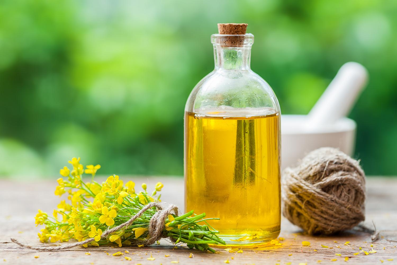 Dieta rica em óleo de canola pode estar associada a dano cerebral | VEJA