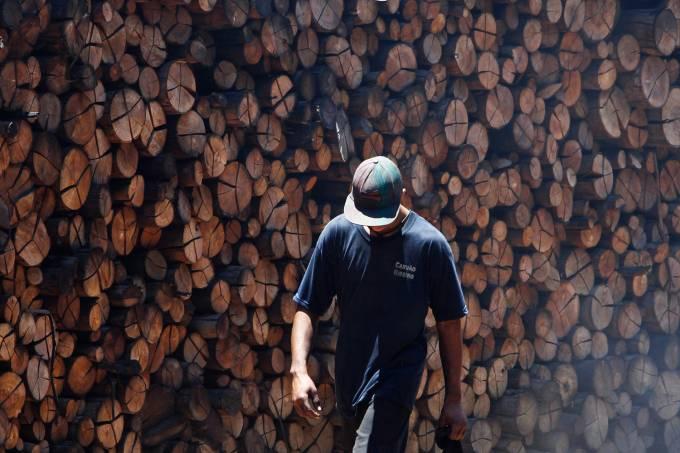 Ministério do Trabalho de São Paulo – 21/01/2014 – trabalho infantil – trabalho escravo