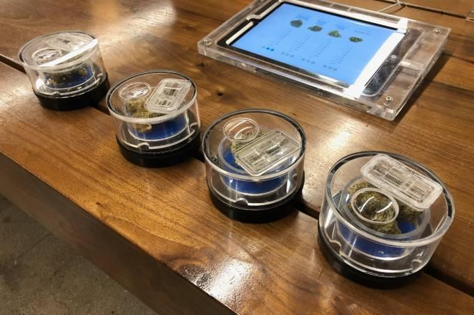Amostras de maconha ficam em recipientes transparentes com fundos coloridos que indicam os efeitos – para relaxamento noturno, para euforia, para foco e criatividade, por exemplo