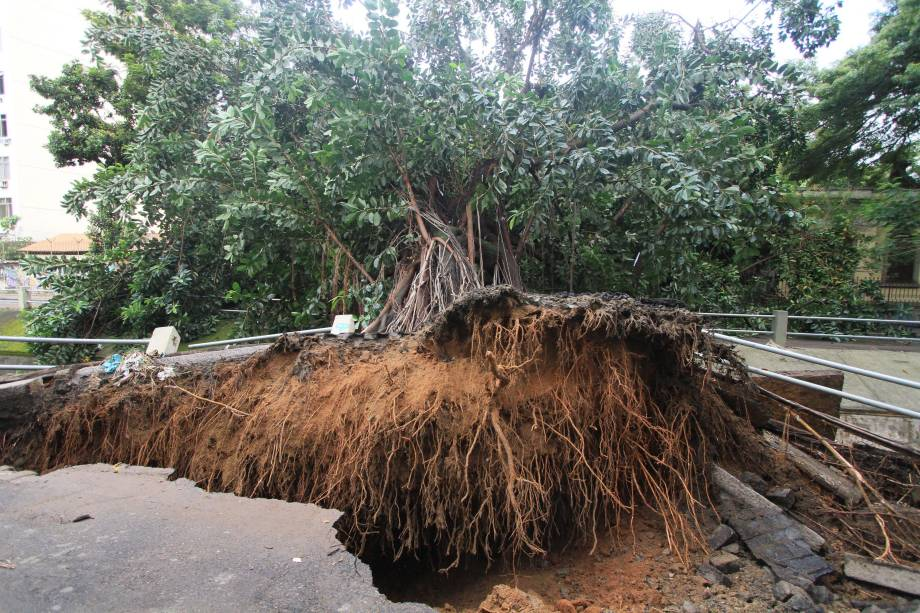 Árvore cai na Avenida Maracanã, na Tijuca, no Rio de Janeiro, em frente à Escola Municipal Soares Pereira, após forte chuva que atingiu a cidade durante a madrugada - 15/02/2018