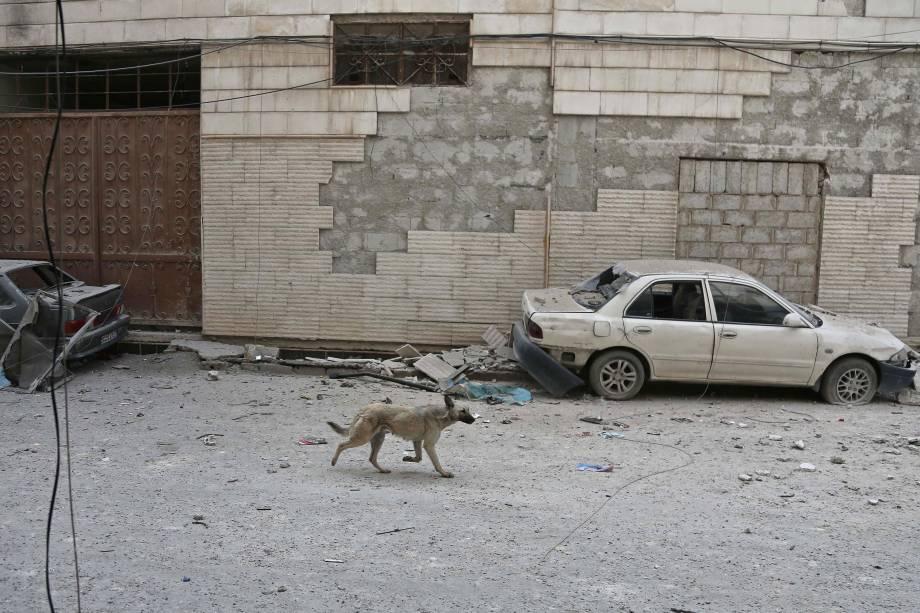 Cão corre em meio aos escombros após um poderoso ataque aéreo das forças do governo da Síria na cidade rebelde de Hamouria, na região sitiada de Ghouta Oriental, nos arredores da capital, Damasco - 21/02/2018