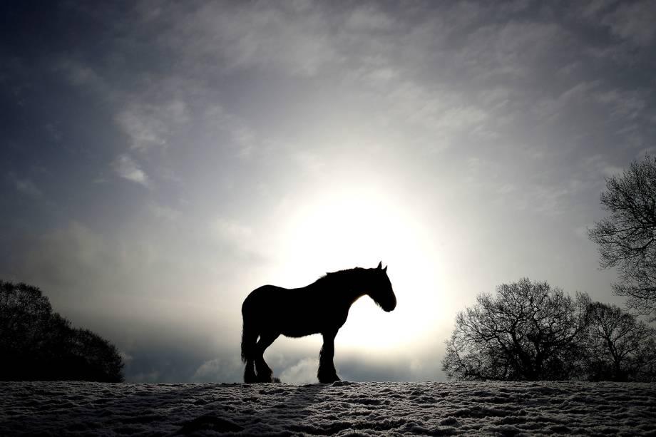 Cavalo é visto em campo coberto de neve na vila de Keele, na Inglaterra - 27/02/2018
