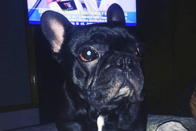 Cachorro morre em voo da United airlines